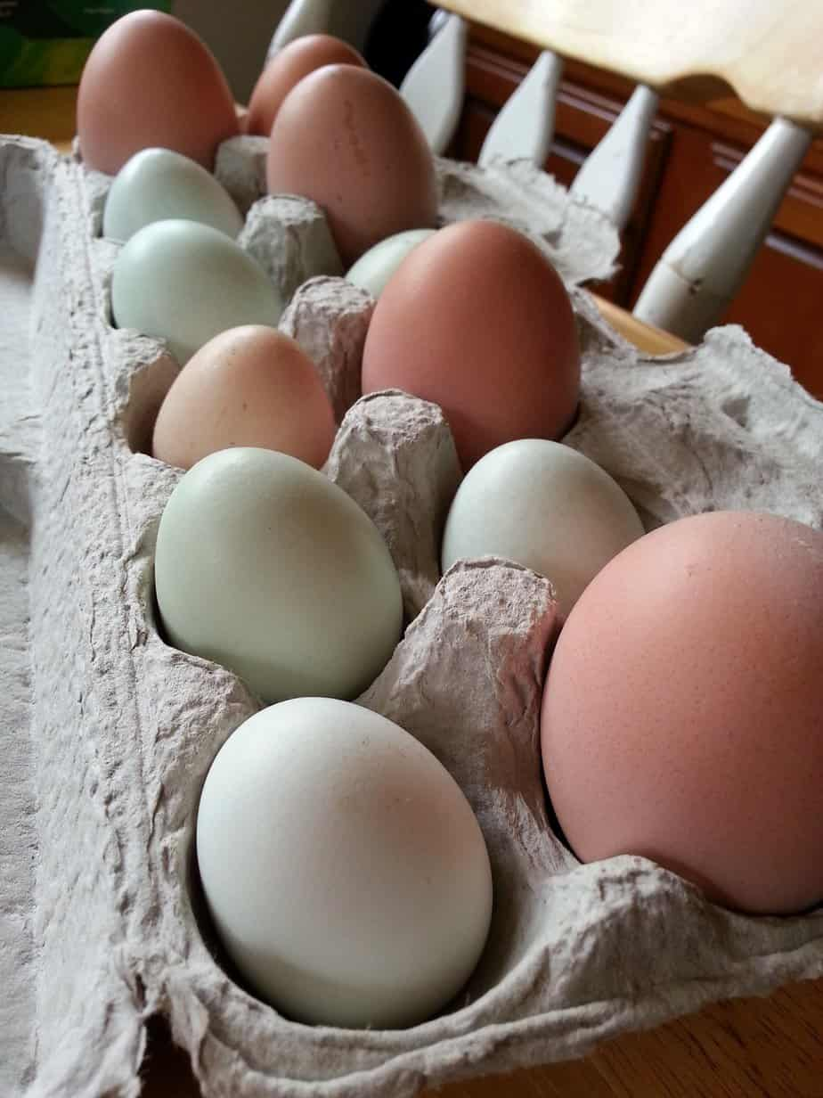 Bantam chickens lay small eggs. Bantam Araucana chickens lay small green and blue shelled eggs. Our big chickens lay big brown eggs, actually it's more like they lay huge brown eggs.