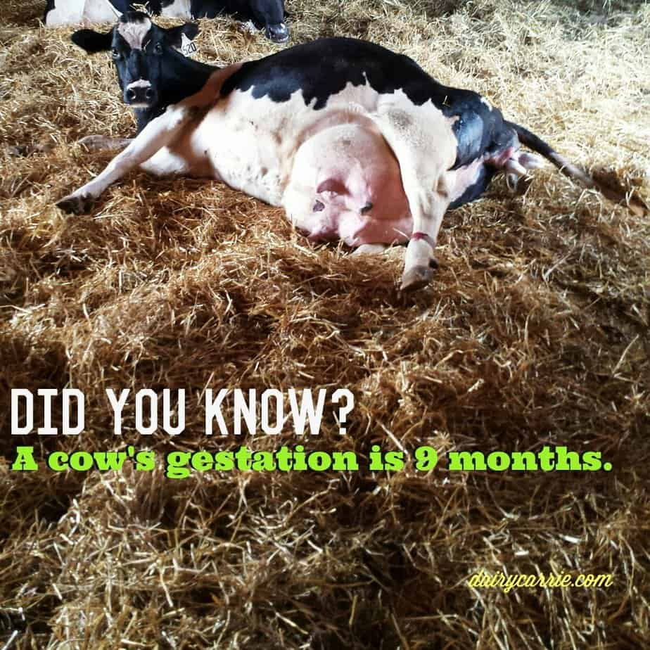 Just the (dairy) facts. 29 facts about dairy!